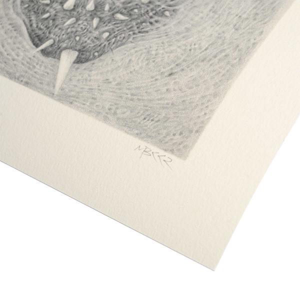 Skull Detail photo of right-corner